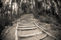 Wooden path in the forest Royalty Free Stock Photos