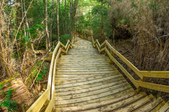Wooden path in the forest Royalty Free Stock Photo