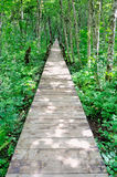 Wooden path in a forest Royalty Free Stock Photos