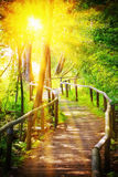 Wooden path in forest. On sunlight Stock Images