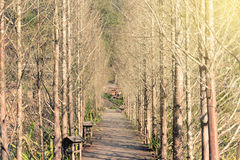 Wooden path in forest Royalty Free Stock Photos