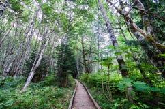 Wooden path going through aspen forest into horizon. stock photos