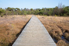 Wooden path in grass and forest winters landscape Royalty Free Stock Photo