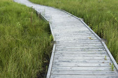 Wooden path. With green grass on the sides Stock Images