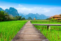 Wooden path and green rice field in Vang Vieng, Laos.  Royalty Free Stock Images