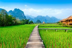 Wooden path and green rice field in Vang Vieng, Laos.  Stock Image