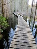 Wooden path on a hiking trail across a swamp lake. Smuggler Cove Marine Provincial Park, BC, Canada. Wooden path on a hiking trail across a swamp lake. Smuggler Stock Photo