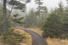 Wooden path in Jizerske hory mountains Stock Image