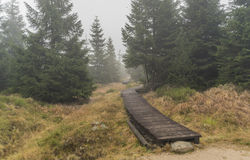 Wooden path in Jizerske hory mountains Royalty Free Stock Images