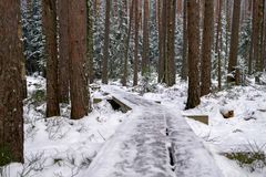 Wooden path laid in Kemeri National Park in Latvia royalty free stock image