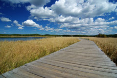 Wooden path through lake and reeds Royalty Free Stock Photography