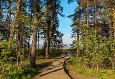 Wooden path leading to Baltic sea beach. Landscape with Pine forest, blue skies, sea and sand on summer sunny day stock photo