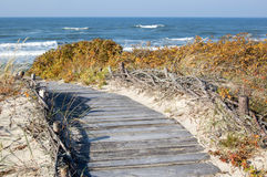 Wooden path leading to the beach Royalty Free Stock Photo
