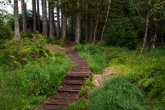 Wooden path leading to a forest Stock Images