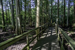 Wooden path leads throug a forest in Alabama Royalty Free Stock Photography