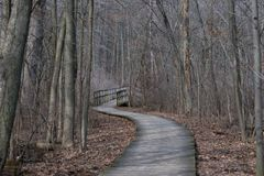 A wooden path that leads to a bridge into the woods. A wooden path that leads to a bridge into the woods in the winter Stock Photography