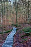 Wooden path dolmen autumn forest, Hoegne, Ardennes, Belgium. Wooden path and leafs on the ground, and beech trees in the nature reserve park of Hoegne in the royalty free stock images