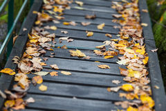 Wooden path with leaves. Tilt shift of autumn leaves covered with wooden path Royalty Free Stock Photography