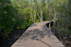 Wooden path in the mangrove forest. Old wooden path in the mangrove forest Stock Image