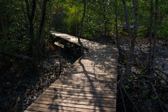 Wooden path in the mangrove forest. Wooden path partly lit by sunlight in the mangrove forest Stock Image