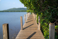 Wooden path between mangrove forest and sea. Wooden path in the middle of the blue sea and green mangrove forest Stock Photo