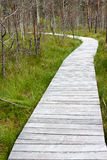 Wooden path through marsh Stock Photography