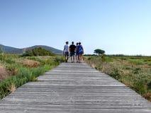 Wooden path through marsh Stock Photos