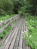 Wooden path in marshland Stock Photography