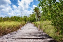 Wooden path on the Mexican jungle in Tulum stock photography