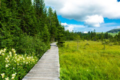 Wooden path through moor in Austria Royalty Free Stock Image