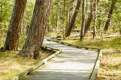 Wooden path in nature Royalty Free Stock Image