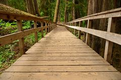 Wooden path in an old-growth forest Royalty Free Stock Photography
