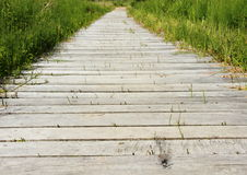 Wooden path over moor area with reed Royalty Free Stock Images