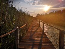 Wooden path over the swamp at sunset royalty free stock image