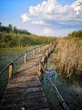 Wooden path over the swamp at sunset royalty free stock images