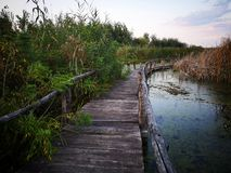 Wooden path over the swamp at sunset royalty free stock photography