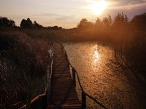 Wooden path over the swamp at sunset stock images