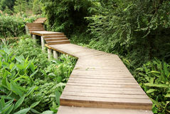 Wooden path in park Royalty Free Stock Photo