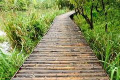 Wooden path in the park Stock Image