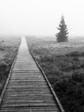 Wooden path in peat bog in black and white, Bozi Dar, Czech Republic, Europe. Bleak autumn landscape scene Royalty Free Stock Images