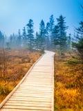 Wooden path in peat bog Bozi Dar, Czech Republic. Colorful autumn landscape scene. Royalty Free Stock Image