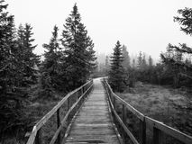 Wooden path in peat bog. Near Bozi Dar in misty morning, Ore Mountains, Czech Republic. Black and white image stock photography
