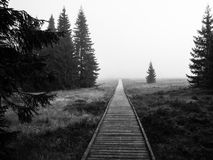 Wooden path in peat bog. Near Bozi Dar in misty morning, Ore Mountains, Czech Republic. Black and white image stock photos