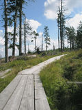 Wooden path through the peatery Royalty Free Stock Image