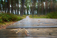Wooden path. Royalty Free Stock Image