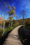 Wooden path in Plitvice Stock Image