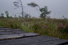 Wooden path on a rainy, misty day stock images