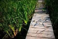Wooden path. Through the reed Stock Photos
