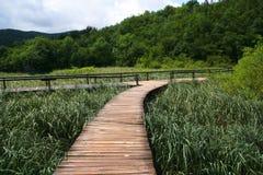 Wooden path through the reeds Stock Photos