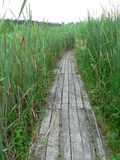 WOODEN PATH IN THE REEDS. GREY WOODEN PATH IN THE REEDS, AREA OF THE FOREST ARBORETUM Stock Images